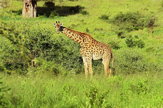 Tarangire National Park, Tanzania: Avvistamenti nei parchi della Tanzania