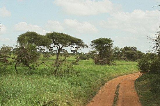 Tarangire National Park, Tanzania: Attraversando in Tarangire park