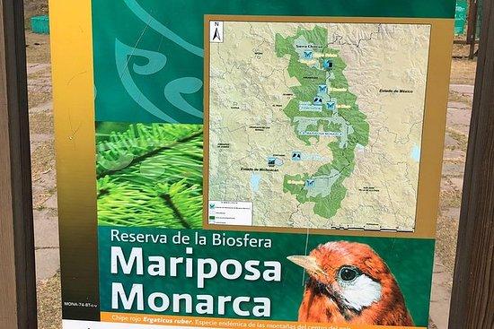 帝王蝶生物圈保护区-游览3个地点