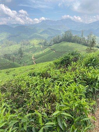 tea plantations , Munnar