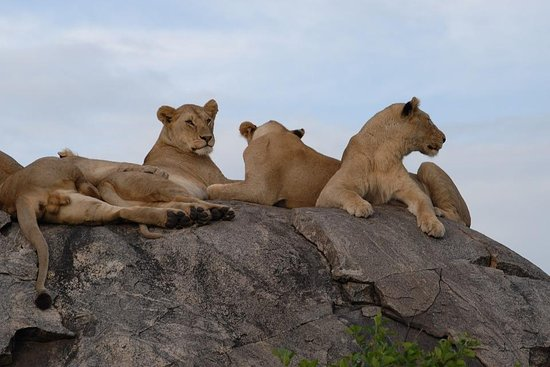 KITONGA TOURS AND SAFARIS CO LTD