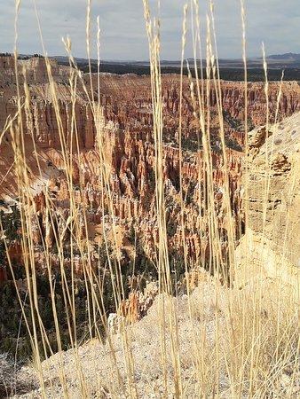 Parque Nacional Bryce Canyon, UT: Bryce Canyon National Park 31