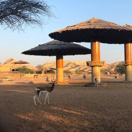 Zoo & Aquarium Public Institution In Al Ain