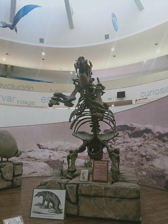 Córdoba, Argentina: динозавры