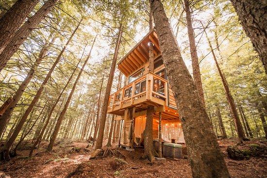 Hardwick, VT: Location: Stone City Treehouse Photo by Chris Daniele @dirtandglass