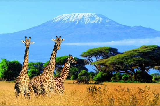 Stunning Kilimanjaro Adventure
