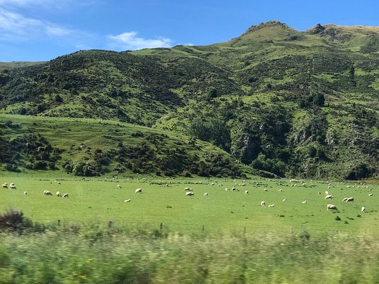 Athol, Nueva Zelanda: Beautiful green landscape with several sheep !