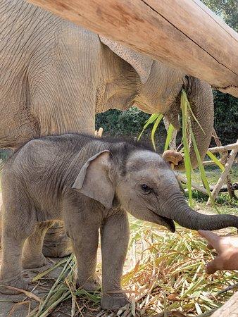 Karen Elephant Retirement
