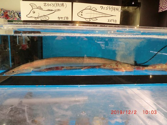 生け簀の魚***??  小さいのはホウボウ