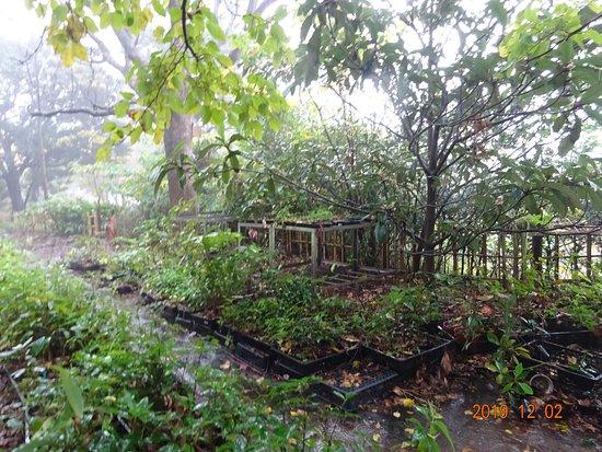 2012/12/02:『ふれあいの森公園を育む会』代表夫婦が、年に、何度も開催している、『子供達の体験どんぐり種まき』のその後。作業エリアに大量にあります。50坪の広さは確実にあります。  これを、どこに植えるつもりなんでしょうね。計画性ゼロです。植物も生きています。ペット同様、生き物は責任を持って育ててください。  子供達が種をまいたどんぐりは、余所で木として育つのはほんの一握りです。ほとんどが、ここで枯れて、死んでいきます。こちらのボランテイア老人達は、本当に残酷なことをやり続けています。