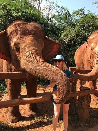 Save Thai Elephant, Elephant Nature Park