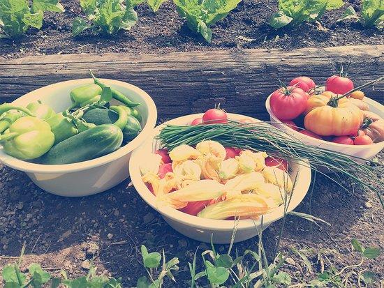 Ernte vom eigenen Garten - Produkte wie Zucchiniblätter werden köstlich zubereitet