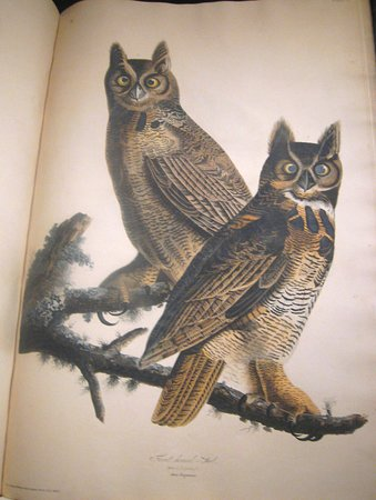 John J Audubon's exquisite depictions