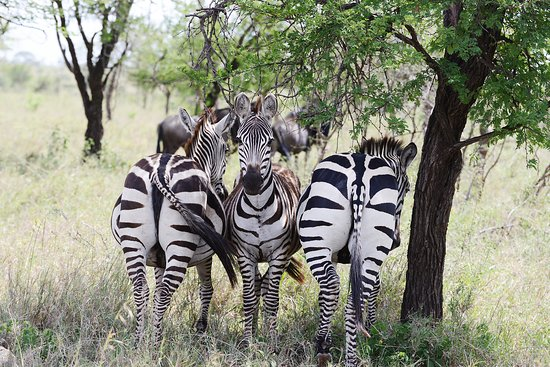 Easy Travel Tanzania