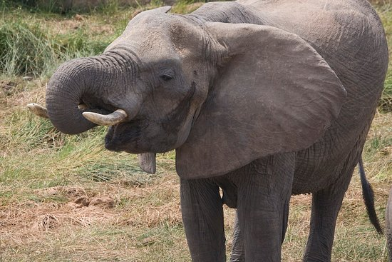 5 Day Tanzania Scenic Luxury Tour: an amazing view when elephant drinks water.