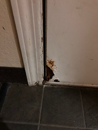 Hole in room door: the work of a rodent? (Room 1712)