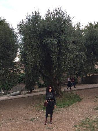 Sus arboles de Olivos tambien nos sorprenden con su imponente Belleza.