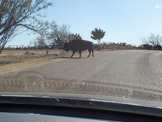 We gave this pedestrian the right of way!