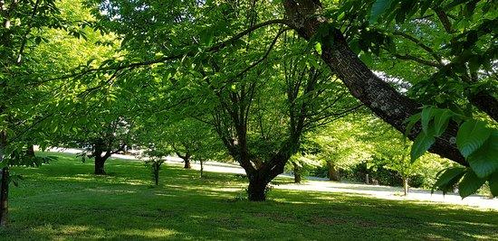 Chestnut Grove at Abbeys Cottage, Wandiligong