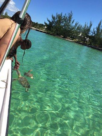 Feeding the sea turtles at Eleuthera