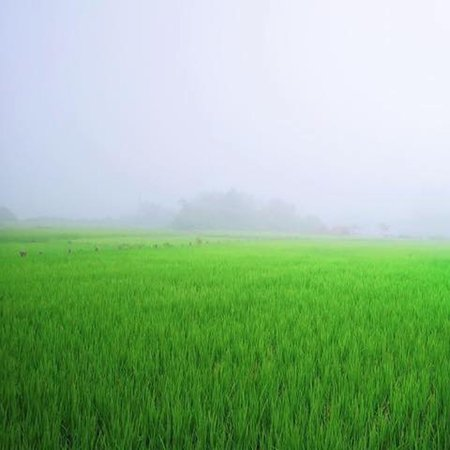 Vientiane, Laos: Meuangfeuang is one of the districts in Laos that most people don't know I would say Meuang Feuang is beautiful in terms of the nature   The pictures were took when the rice growing at the time many local people loved to visit to spare time with love one or family and friends