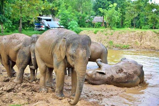 Bangkok Elephant Care Sanctuary