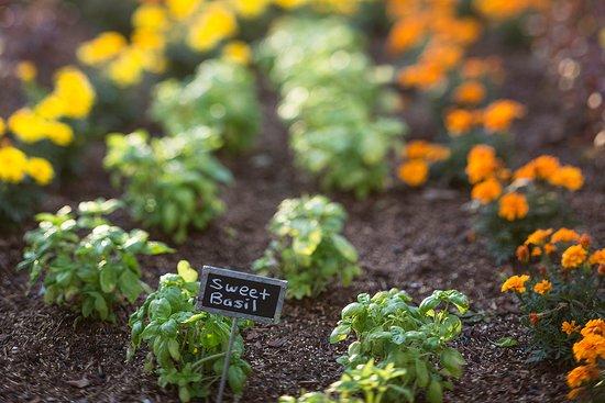 Chef's Very Own Herb Garden