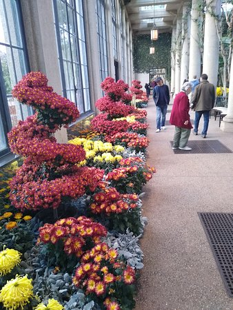 a view of topiaries  and floral displays.