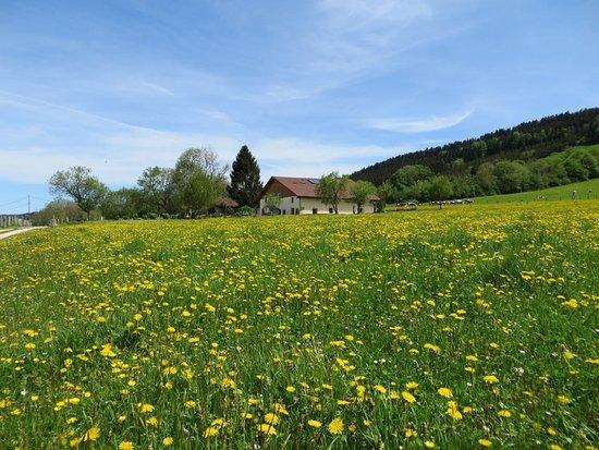 Pierrefontaine-les-Varans, Francia: Parmi les fleurs