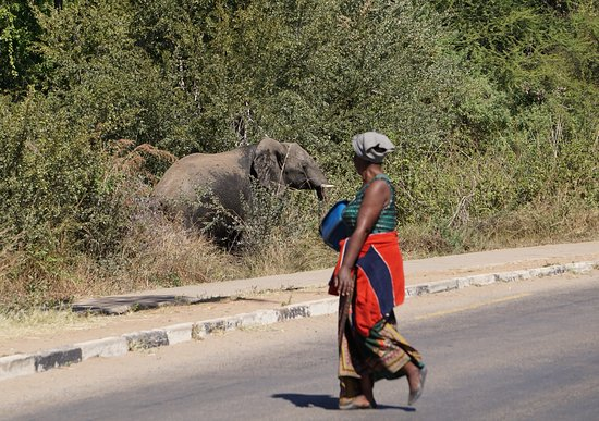 Watch for elephants (keep your distance!!!!) when walking to/from Victoria Falls!