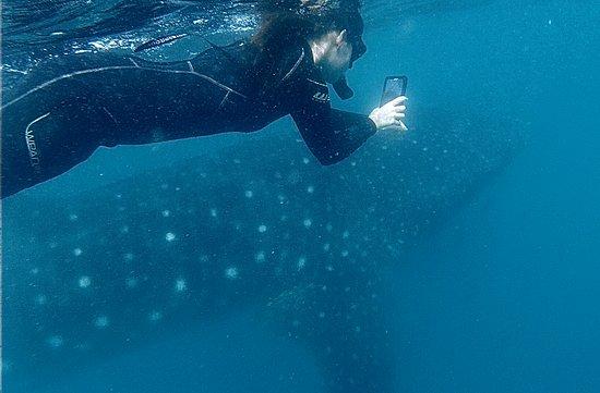 Whale Shark Adventure 사진