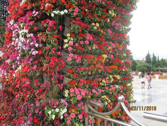 entrance covered in flowers