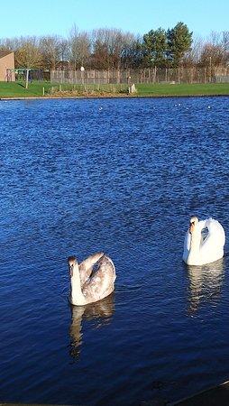 Borrowfield Pond, Montrose