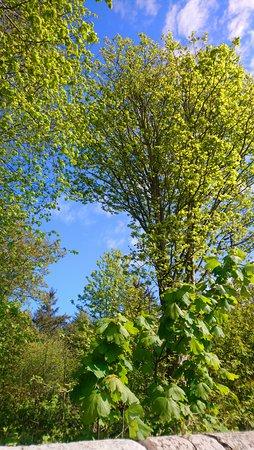 Montrose, UK: Rosemount Woods, Hillside