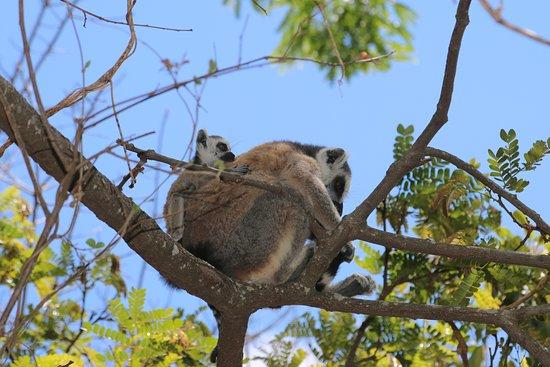 Ambalavao, Madagascar: Lemurenpark Anja