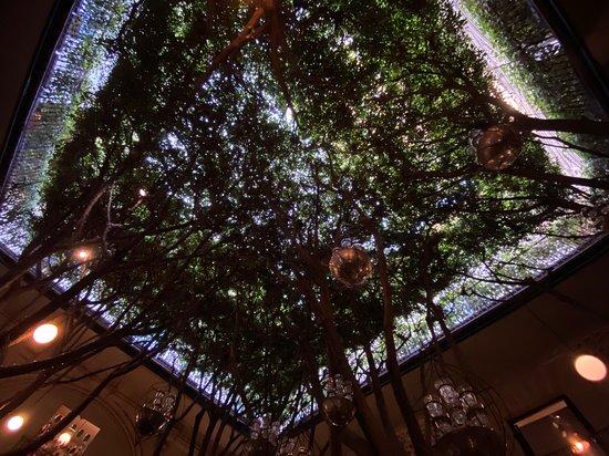 The tree canopy