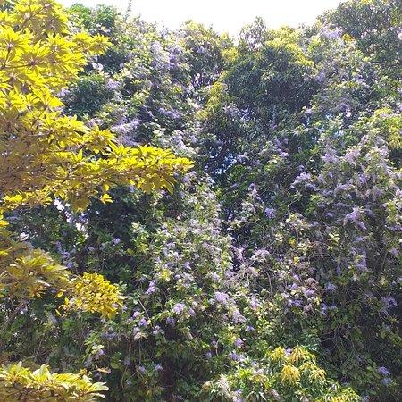 Distrito de Pamplemousses: Pamplemousses  garden
