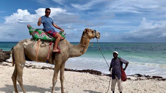 cammello sulla spiaggia del Garoda