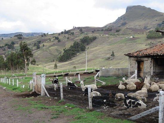 Tigua, Эквадор: Une partie de la ferme