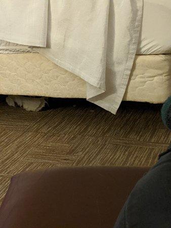 Under bed debris