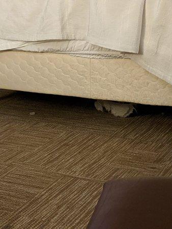 Under bed garbage