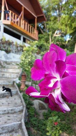 Photos de Tree House Bungalows - Photos de Koh Tao - Tripadvisor