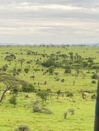 Half-Day Hot Air Balloon Safari and Breakfast in Serengeti Resmi