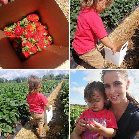 Whatawhata Berry Farm