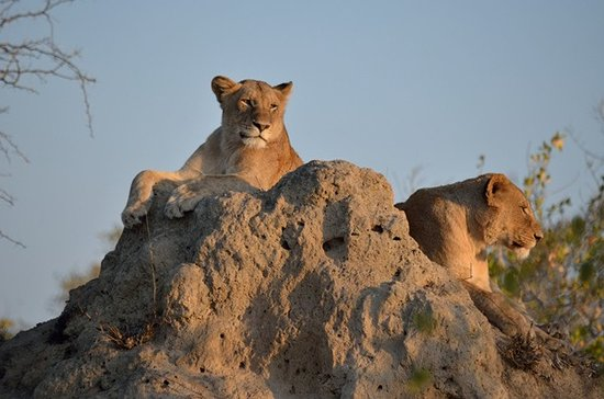 Kruger National Park Day Tours