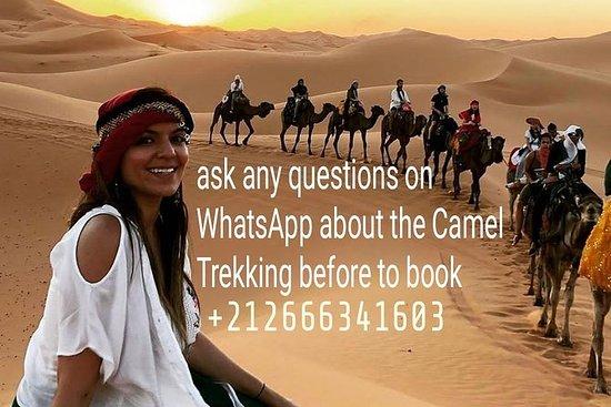 骆驼骑行和在撒哈拉沙漠梅尔祖卡露营