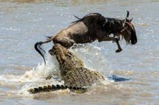 Parc national du Serengeti, Tanzanie : https://miraclewildlifesafaritours.com/packages
