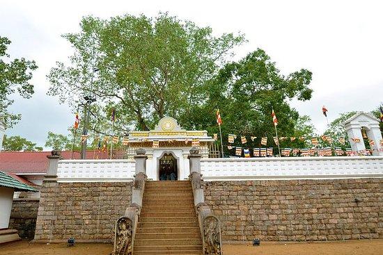 Visit Anuradhapura Sacred City from Negombo: Visit the Sacred City of Anuradhapura