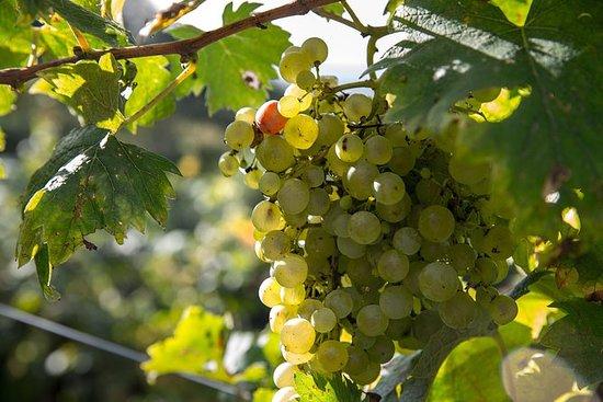 アペリグスト:3ワインのプライベートテイスティング