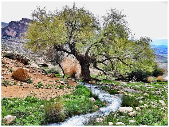 Fars Province, Iran : its the nature of estahban in spring. Pleasant weather and so exiting view is just for relaxing.you'll found this river when the rainfall is over 400 mm in each year.              pic by meysam alizadeh